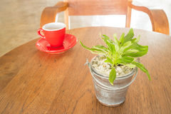 Red cup of coffee and green plant bucket on wooden table Royalty Free Stock Images