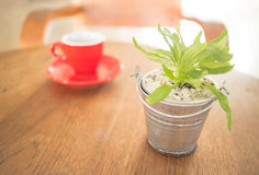 Red cup of coffee and green plant bucket on wooden table Stock Photos
