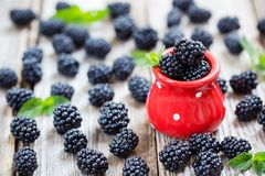 Red dotted cup full with fresh blackberries royalty free stock photos