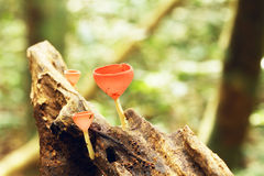 Red cup fungi Stock Images