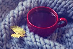 Red cup of tea. And wool blanket royalty free stock photo