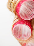 Red Curlers in Blond Hair Stock Image