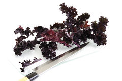 Red Curly Kale (Brassica oleraceae) and knife Royalty Free Stock Image
