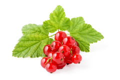 Red Currant. Stock Photography