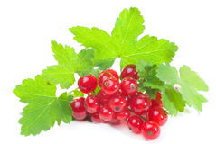 Red currant. With leaves isolated on white background Royalty Free Stock Photo