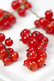 Red currant. On white background Royalty Free Stock Images
