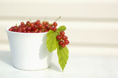 Red currant. Fresh red currants in the white bowl royalty free stock photo