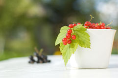 Red currant. Fresh red currants in the white bowl stock photography