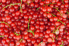 Red currant. Natural abstract  background Stock Photos