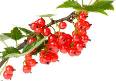 Red currant. On white background Stock Photo