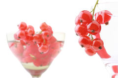 Red currant. A red currant in the wineglass isolated on white background Royalty Free Stock Images