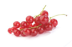Free Red Currant Royalty Free Stock Images - 13652669