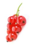 Red currant. Isolated on white background Royalty Free Stock Image