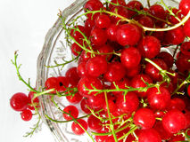 Red currant. The photo shows sprigs of red currants Royalty Free Stock Photo