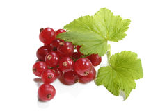 Red Currant. On white background Royalty Free Stock Photography