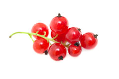Red currant. Isolated on white royalty free stock photography