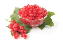 Red currant. With leaves before white background Royalty Free Stock Image