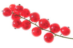 Red currant. On white background Stock Images