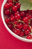 Red currant Royalty Free Stock Images