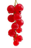 Red Currant Royalty Free Stock Photography