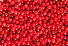 Red currant. Background of ripe red currant Royalty Free Stock Photography