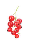 Red currant. Isolated over vhite Stock Images