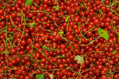 Red currant. Loose of berries of a red currant stock images