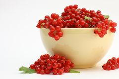 Red currant. On the white background royalty free stock photography