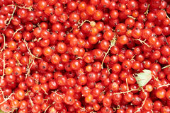 Red currant as background Stock Photography