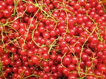 Red currant assorted background Royalty Free Stock Photo