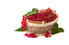 Red currant in a basket Stock Image