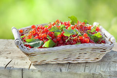 Red currant in a basket on an old wooden table Royalty Free Stock Photo
