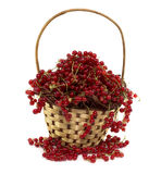 Red currant in basket Stock Photos