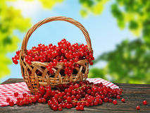 Red currant in a basket Stock Photography