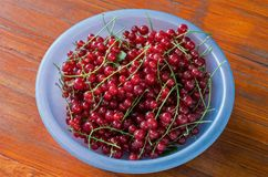 Red currant berries in a blue bowl. On a background of painted wood Royalty Free Stock Photo