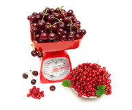 Red currant berries and cherries and kitchen scales on a white Stock Images