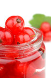 Red currant berries Stock Photography
