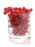 Red currant berries in a glass Royalty Free Stock Photos