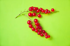 Red currant berries on green. Bright shot of two red currant berry clusters on green background in studio environment Stock Photo