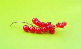 Red currant berries on green. Bright and colorful photography of red currant berry clusters on green background in studio environment Stock Photography