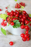 Red currant berries with green leaves Stock Images