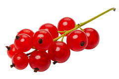 Red currant berries, isolated Royalty Free Stock Photo