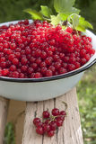 Red currant berries in a large bowl on the bench Royalty Free Stock Photography