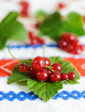 Red currant berries on a leaf. Stock Photo