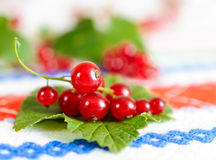 Red currant berries on a leaf. Royalty Free Stock Image