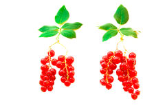 Red currant berries with leaves symbolizing the tr Stock Images