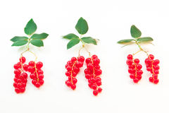 Red currant berries with leaves symbolizing the tr Stock Image