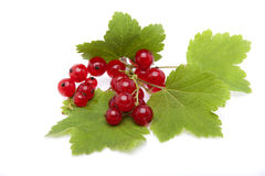 Red currant berries lying on the leaves of currants Royalty Free Stock Photography