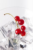 Red currant berries in a martini glass on white background Stock Photos