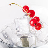 Red currant berries in a martini glass on white background Stock Photo